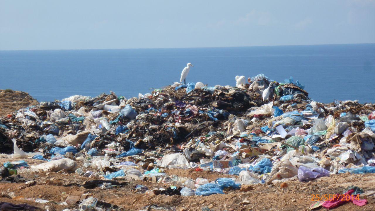 NEW Large Plastic Bailer from Blue Bottle Marine