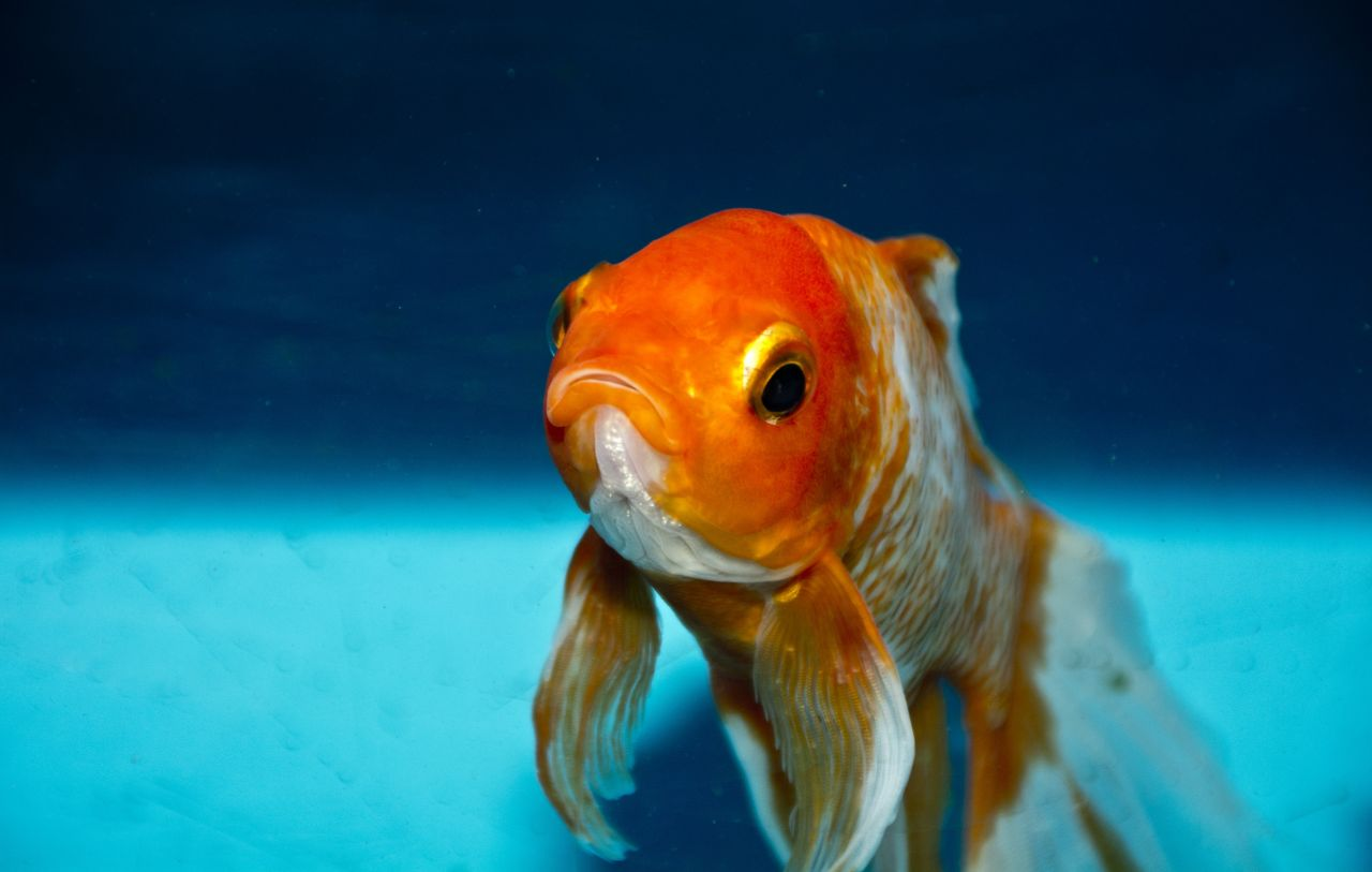 Blog Five Ways To Upcycle A Fish Tank Waste Management World