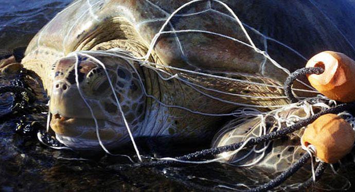 marine debris, plastic, ocean conservency