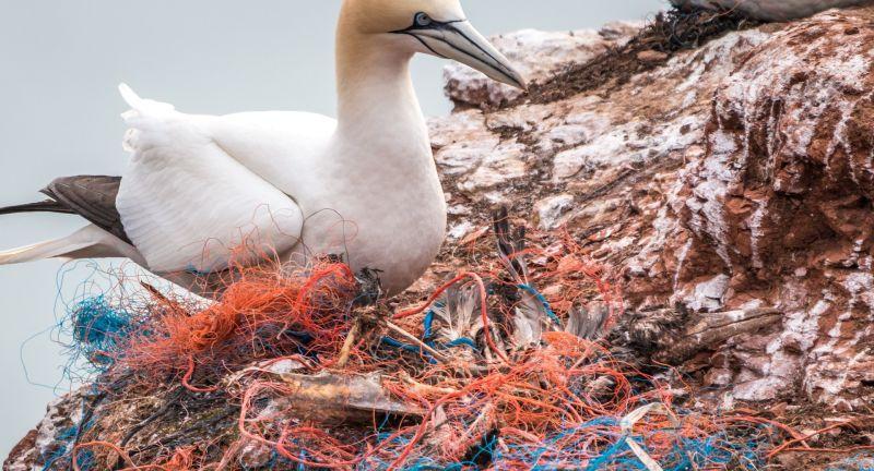 plastic, oceans, waste