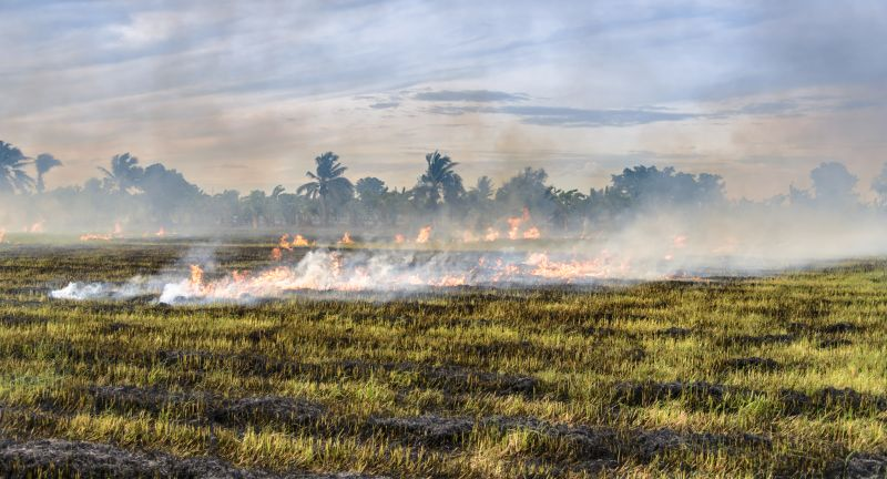 agriculture, burning, asia, farm, global, brown, country, crop, cut, danger, day, environment, equipment, fall, farmer, farming, farmland, field, fire, grass, harvest, hot, inflammation, landscape, natural, nature, outdoors, paddy, pattern, plant, plantation, pollution, rice, season, smoke, straw, stubble, thailand, village, warming, working, yellow, country, agriculture, burning, asia, farm, global, brown, country, crop, cut, danger, day, environment, equipment, fall, farmer, farming, farmland, field, fire, grass, harvest, hot, inflammation, landscape, natural, nature, outdoors, paddy, pattern, plant, plantation, pollution, rice, season, smoke, straw, stubble, thailand, village, warming, working, yellow