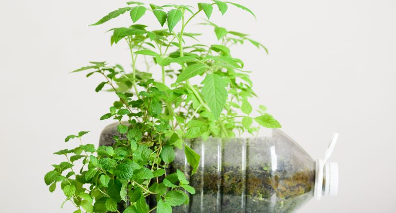 plant, pot, diy, bottle, eco, recycle, soil, plastic, decoration, home, gallon, vegetable, garden, gardening, concept, tomato, mint, peppermint, container, growing, growth, idea, recycling, green, craft, creative, decor, design, reuse, save, natural, nature, organic, leaf, ecology, environment, material, small, fresh, agriculture, botany, freshness, object